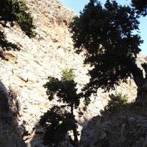 Kreta: In der Anopolis-Schlucht