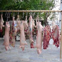 Kea: Nichts für Vegetarier
