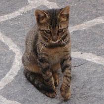 Kreta: Freundliche Katze