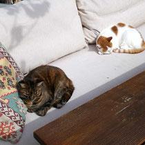 Katzen haben es hier gut