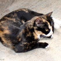 Kreta: Katze in Niko's Paradise