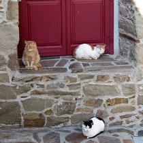 Katzen gibt es hier reichlich...