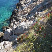 Blühende Küste