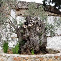Bizarrer Baumstumpf