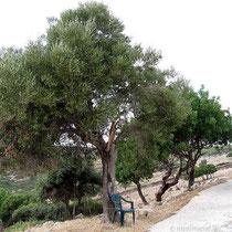 Bestuhlter Baum