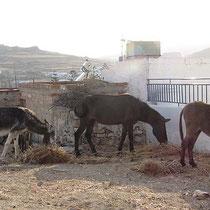 Eselsparkplatz in Chorio