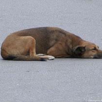 Keine schlafenden Hunde wecken