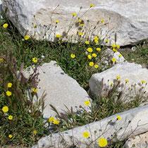 Naxos: Es blüht überall
