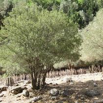 Bei Samaria