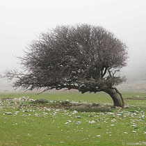 Gebogener Baum