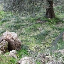 Die Netze für die Oliven