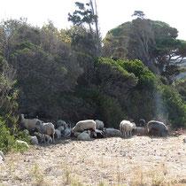 Und Schafe
