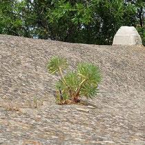 Ein Baum wächst auf dem Dach?
