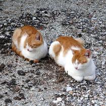 Müde Strandkatzen