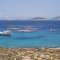 Chalki: Fischzucht bei Kania