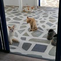 ... und Terrassenkatzen