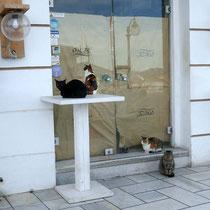 Hier hat man ein Herz für Katzen