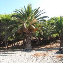 Am Palmenstrand
