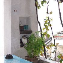 Die Katze sucht Schutz vor dem Regen