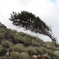 Windschräges