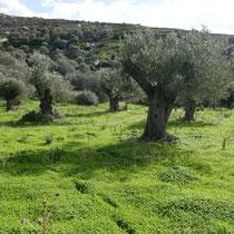 Januar auf Naxos