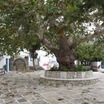 Platane vor der Kirche