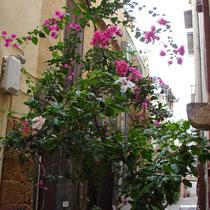 Kreta: Blumengeschmückte Strasse