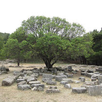 Der Baum scheitn Steine zu tragen