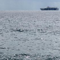 """Da ist sie ja schon wieder, die """"Isola di Stromboli"""""""