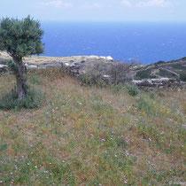 Frühling auf Sifnos