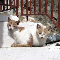Zweiköpfige Katze?
