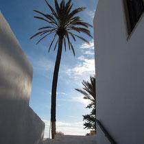 Aufblick zur Palme