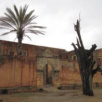 Der zerstörte Baum