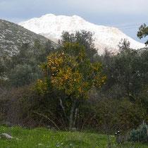 Schneeberg mit Orangen