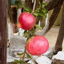 Kea. Granatapfel