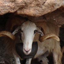 Kreta: Der Gehörnte