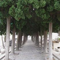 Allee auf dem Friedhof