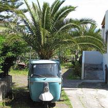 Eine Palme auf dem Dreirad