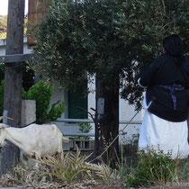 Karpathos: Frau mit Ziegen in Diafani