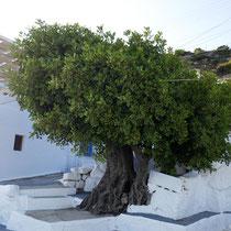 Schöne Baum