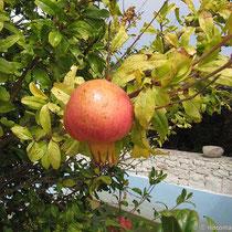 ...mit Frucht