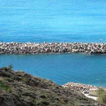 Der neue Hafen von Chora Sfakion - keine Fähre da