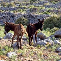 Karpathos: Doppelesel