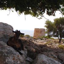 Kreta: Loutro: Venezianerburg und Ziegen