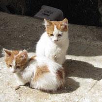 Kätzchen in Agio Galas