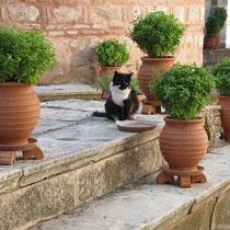 Katzen lieben grün