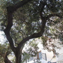 ...unter einem schattenspenden Baum