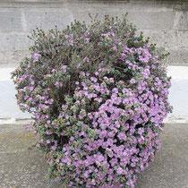 Blumenschmuck (gepflanzt)