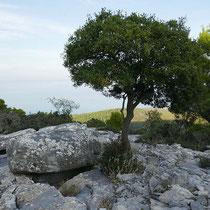 Die Felsengräber ...