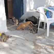 Die Katzen verden versorgt